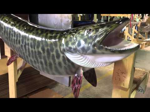 Muskie Fish mount | Gray Taxidermy Fishmounts, Custom fish reproductions