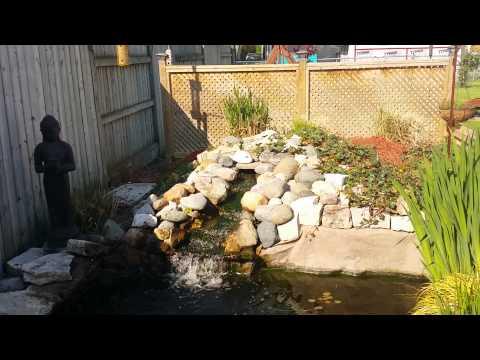 Spring 2014 Koi pond update