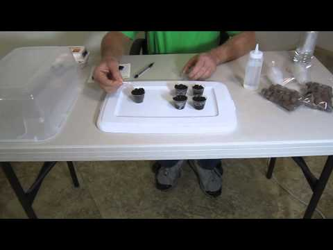 How to start or germinate seeds fast and easy with coco coir pods.