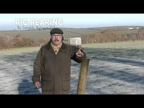 Pig Rearing Keeping The Beginners Guide Winter Tips blog