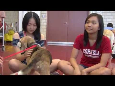 Cornell University College of Veterinary Medicine Hosts Students from Hong Kong for Summer Session