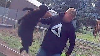 SHOCKING: Animal Cruelty Exposed at Papanack Zoo