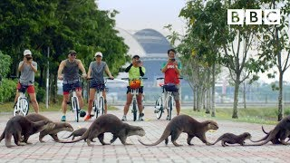 Why this adorable otter family took over Singapore