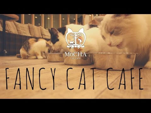 Tokyo's Fanciest Cat Cafe | Kanai even Tokyo 猫カフェ