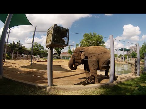 GoPro: Houston Zoo - Free Day (1st Tuesday of Every Month) - April 2015