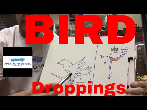 How to safely remove bird droppings from your car or truck without scratching or marring the clear.