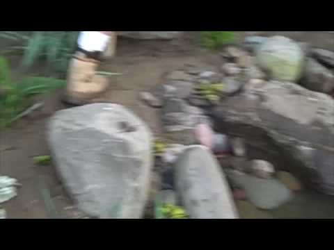 How to Plant around a Pond