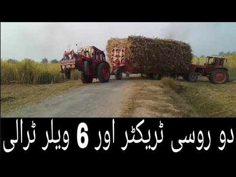 Two Belarus 510 Tractor Pulling and FIAT 480 Help to Get out From Field With Heavy Sugarcane Trailer