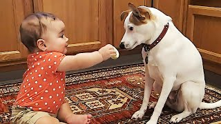 Baby With Dogs and Cats Playing Together 😆 Funny Baby and Pets Moments