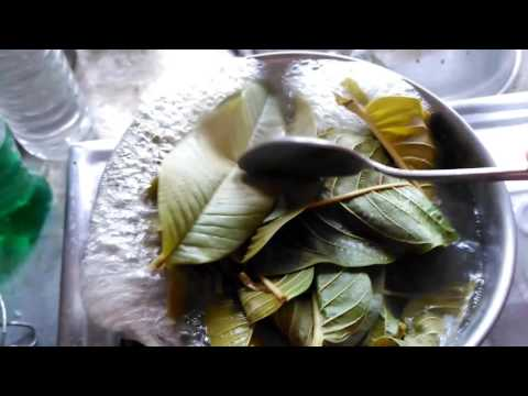 DIY: Guava leaves for hair growth | Homemade hair growth solution | Stop Hairloss Full HD