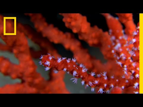 See the Beautiful and Endangered Red Coral of the Mediterranean | National Geographic