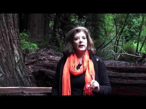 Muir Woods: Weekend in San Francisco