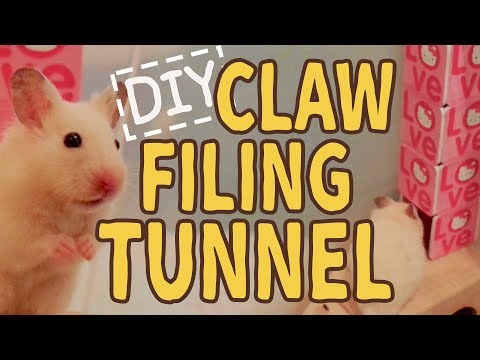 Claw Filing Tunnel ☆HAMSTER DIY☆