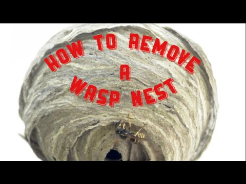 HOW TO REMOVE A WASP NEST WITH A VACUUM CLEANER!