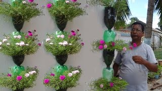 Tree planting in hanging bottles on wall