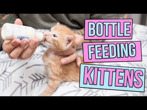 How to Safely Bottle Feed a Kitten