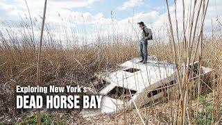 Dead Horse Bay - A scavenger