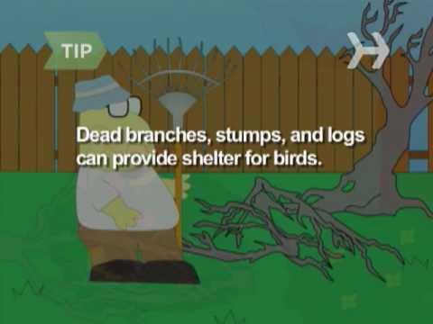 How to Make Your Backyard a Bird Haven