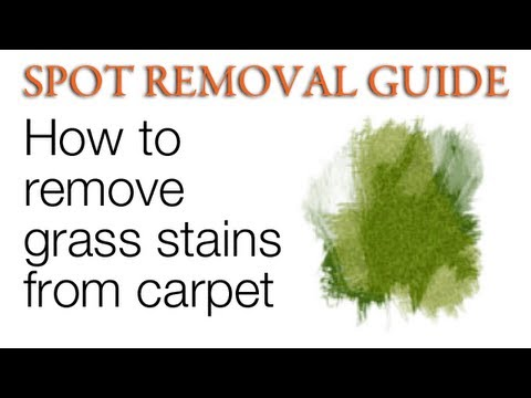 How to Get Grass stains out of Carpet | Spot Removal Guide