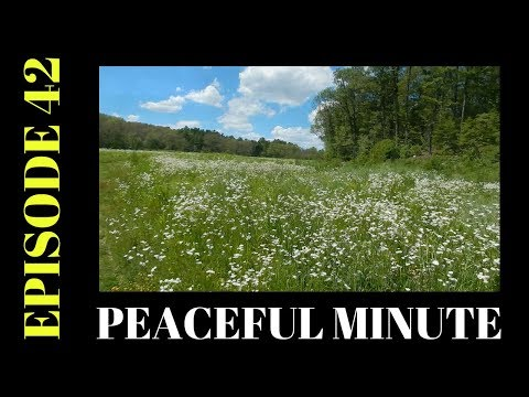 Peaceful Minute ~ Episode 42 ~ White Wildflowers