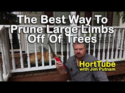 How To Prune Large Limbs Off Of Trees - Easy Pruning Method To Prevent Damage To Tree