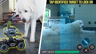 Dog vs DJI
