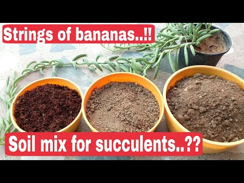 Soil mix for succulents, Strings of bananas succulents, succulents potting mix