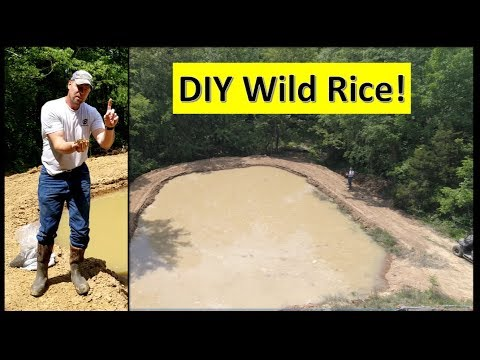 DIY Planting WILD Rice Duck Pond and (Prepper pond??) 05-09-18