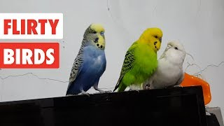 Flirty Birds | Funny Bird Video Compilation 2017