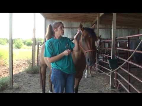 Removing, Preventing Ticks On Horses Naturally