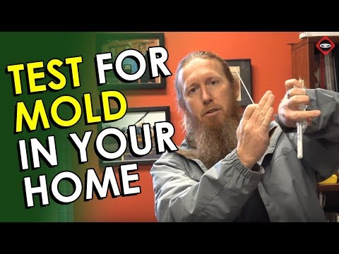 Mold Testing | How To Test For Mold In Your Home | DIY Mold Test Kit | Best Mold Test Kit to Use