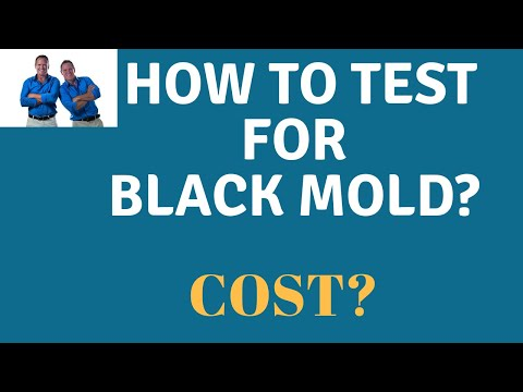 Mold Air Testing: What does it cost and what are the steps to testing for mold in your home?