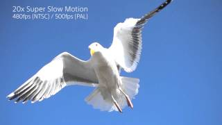 Sony RX100 IV & RX10 II Super Slow Mo Video Seagull