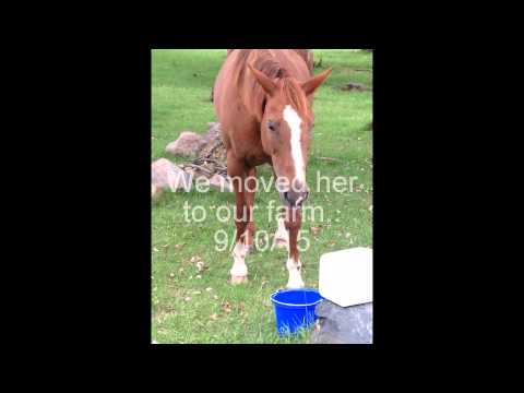 Ehrlichiosis/limes disease & Horses HORSE OWNERS WATCH!!!