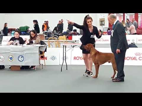 Dog Ring Show Italia - Bhola Shola
