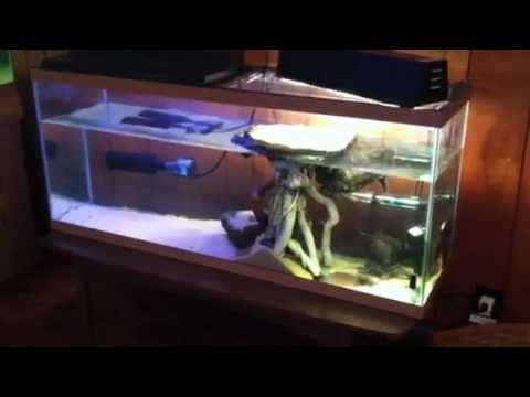 Turtle's in 55 & 75 Gallon Tanks and Cage for Winter