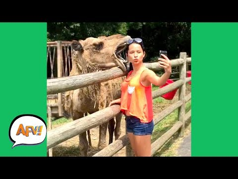 Xxx Mp4 UNEXPECTED Animal ATTACKS AFVs Wildest Animal Moments 3gp Sex