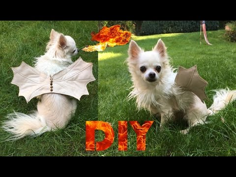 DIY Doggie Dragon Costume | Halloween Costume for Dogs