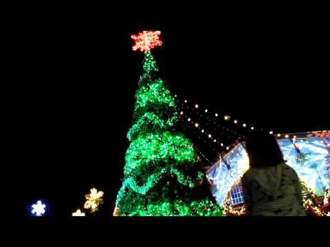 Busch Gardens Christmas Town 50ft. Christmas Tree Light Show