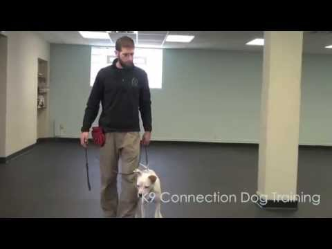 How To Stop your PUPPY BITING on a Leash-doggy day cares