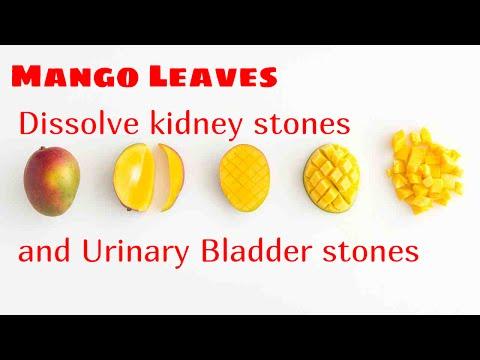 Mango Leaves dissolve  kidney stones and Urinary Bladder stones