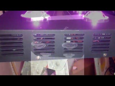 COB Grow Lights GrowthStar SPIDER 4X MCOB LED Medical Grow Light