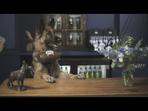 World's first bar staffed by dogs opens in London