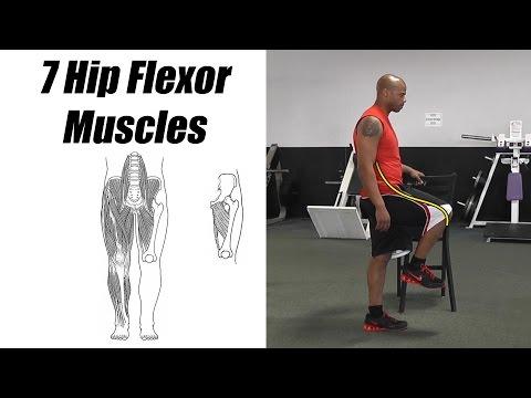 7 Hip Flexor Muscles. A.K.A. Thigh Flexor Muscles. Psoas, Iliacus, Rectus Femoris, etc.