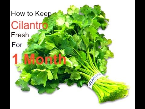 Cilantro Saving Tips - How to store Cilantro | Keep Coriander fresh for long(1 Month)