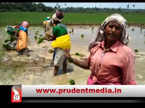 GOAN FARMING DEPENDENT ON NON-GOAN LABOUR