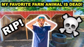 My FAVORITE Backyard FARM Animal is DEAD!!! (RIP) - Had To Call the VET