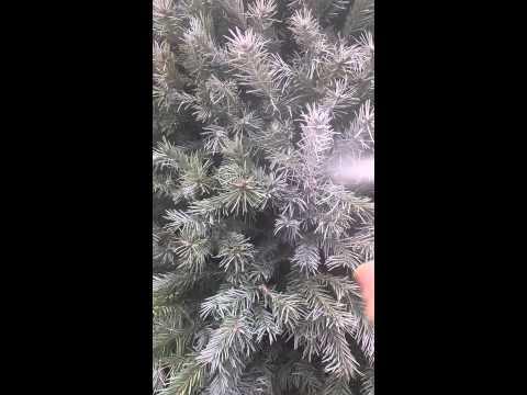 Beautifully white Christmas Tree