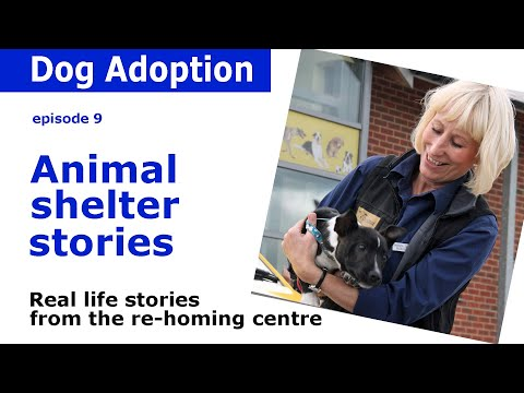 Dogs home stories and advice from the Dogs Trust rehoming centre | Episode 9