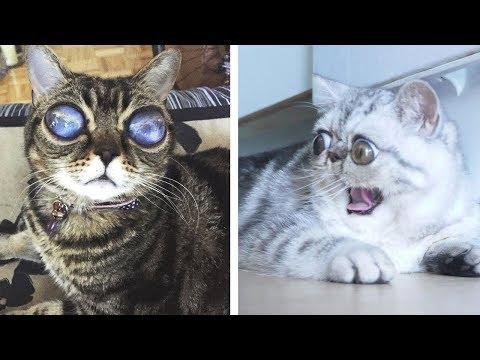5 Cats You Won't Believe Are REAL (Alien Cat, Grumpy Cat, Scaredy Cat)